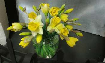 Counselling room with daffodils